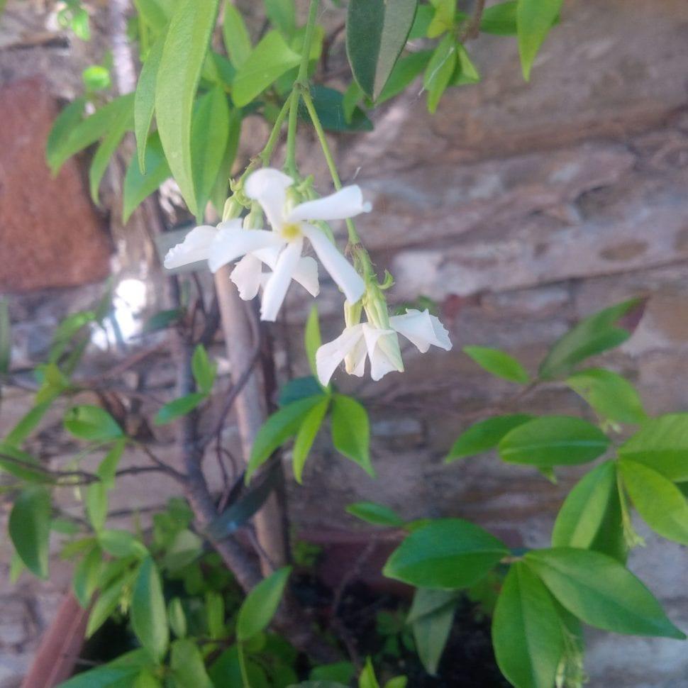 Květ jasmín vůně do vysavačů
