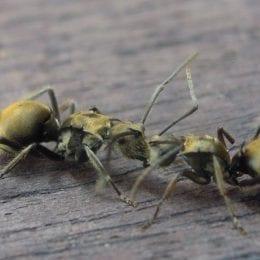 Mravenci a jiný lezoucí hmyz vysáváte hylou -