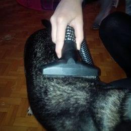 Česání psa - srsti odsávaným hřebenem