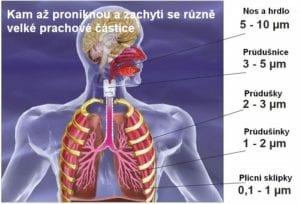 Jak se alergeny dostanou do těla