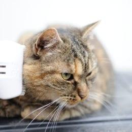 Kočky milují vyčesávání kožíšku kartáčem foolee. Vyberete s ním podsadu a mrtvé chlupy
