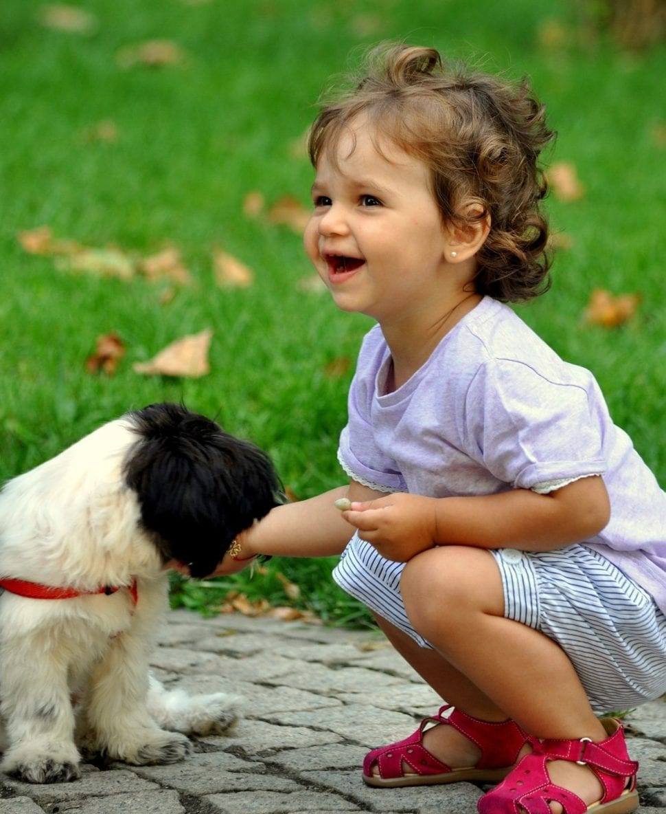 štěně olizuje dítě a baví to oba