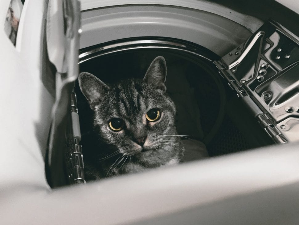 Přidávejte vůni do sušičky - kočky to ocení