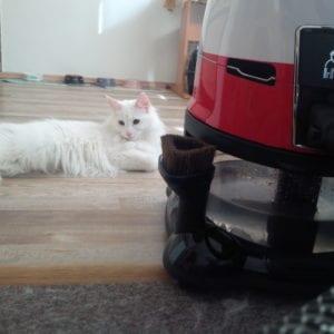 Vodní vysavač Hyla je nejlepší na vysávání kočičích chlupů