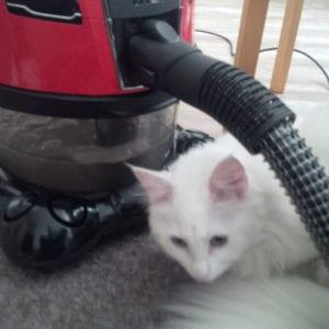 kočka a vodní vysavač hyla