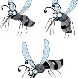 Lapání komárů, co otravují apijí krev. Jak na to