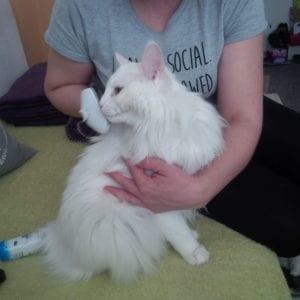 Línající kočka vyčesávaná kartáčem Foolee easee
