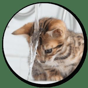 kočka se koupá se šamponem foolee beauty na rychlé vyčesávání v období línání
